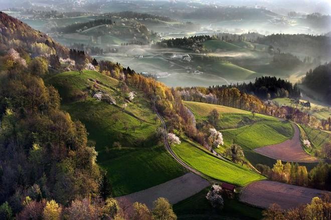 SloveniaForest